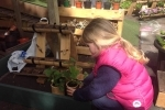 Grace popping her new pot into the palet garden