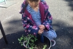 Imogen digging a hole for the sweet pea plant