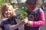 Isobel and Anushka working together to plant a strawberry Elsanta