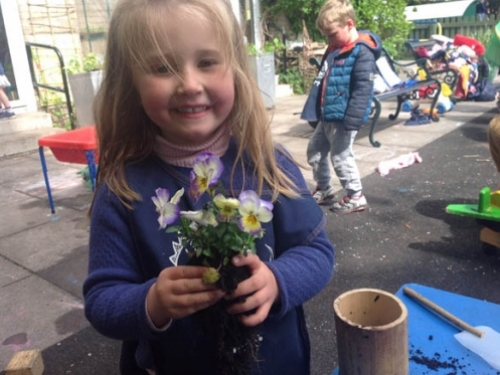 Violet with a Viola lemon swirl ready for potting into a bamboo pot