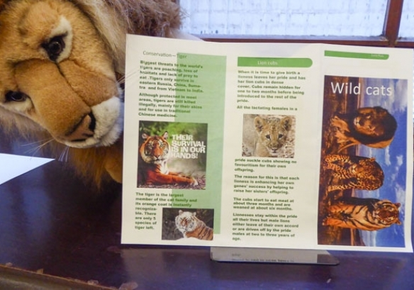 Wild Cats leaflet 584w